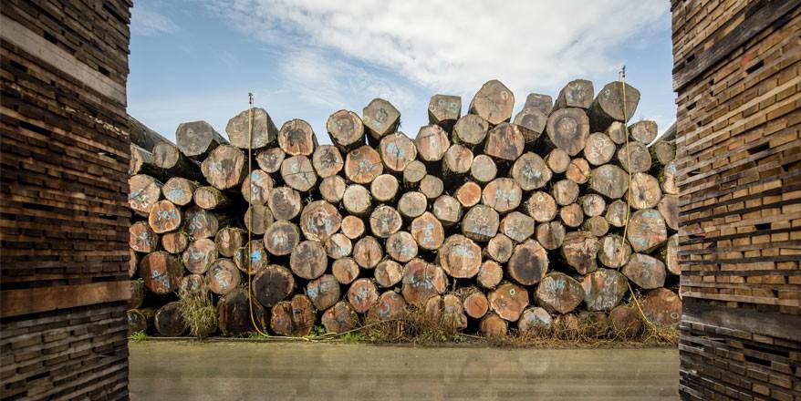 French forest oak logs