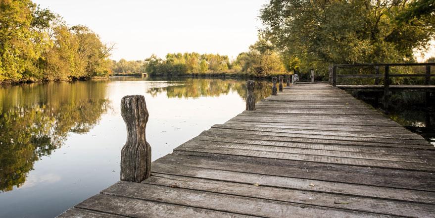 Oak wood watering pond