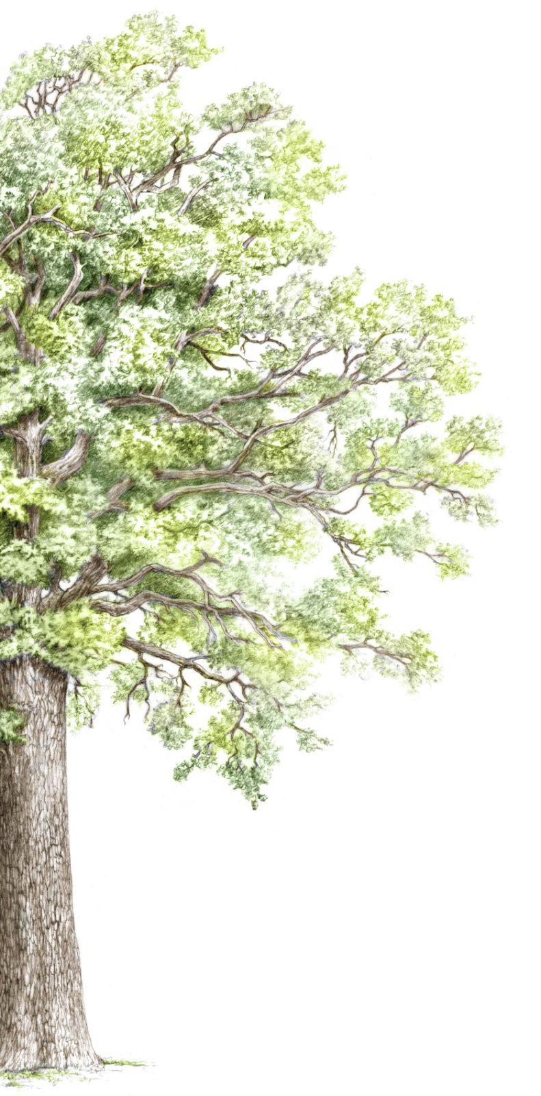 </p> <h1>Tonnellerie Baron, fabricant de barriques d'exception en bois de chêne de haute qualité depuis 1875</h1> <p>